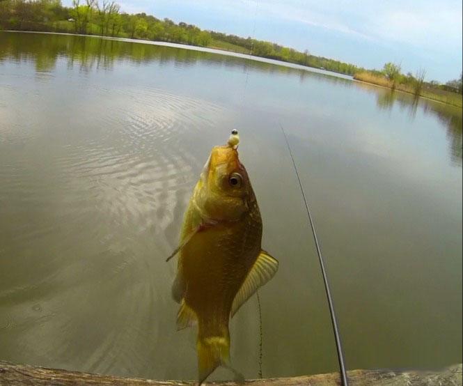 ловля рыбы на озере с лодки