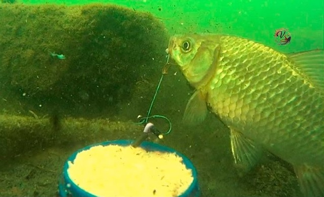 Рыбалка на карася на крышку