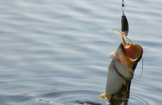 Наживка на крючке для ловли рыбы