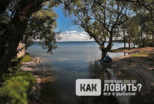 Ловля налима в Калининградской области