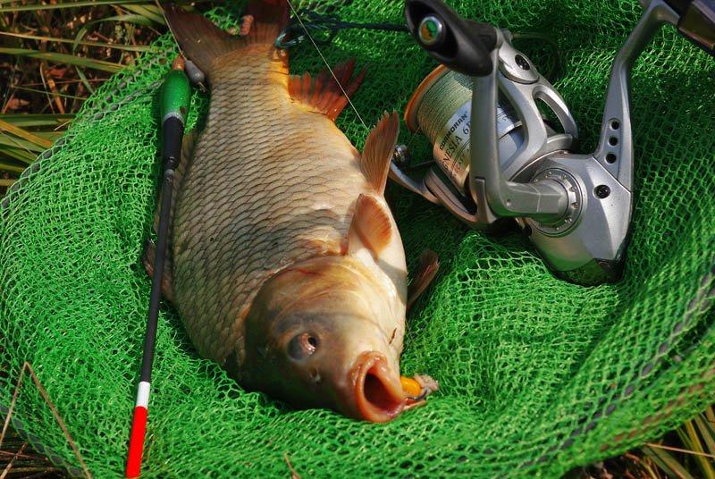 Рыбалка и снасти на сазана