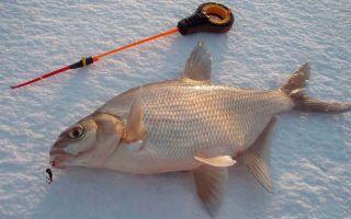Ловля рыбы: применение коромысла на леща