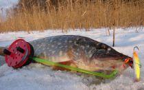 Ловля щуки на балансир — лучший способ для рыбалки на заросших водоемах