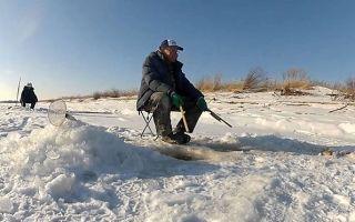 Как ловить белого амура зимой