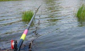 Поплавочная снасть на карася – особенности карасевой рыбалки