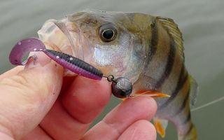Твистер на окуня – приманка, с которой стоит порыбачить