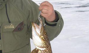 Ловля хищника: капкан на щуку