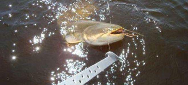 Ловля сома на квок – видео рыбалки на Днепре
