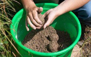 Прикормка для плотвы: летний состав